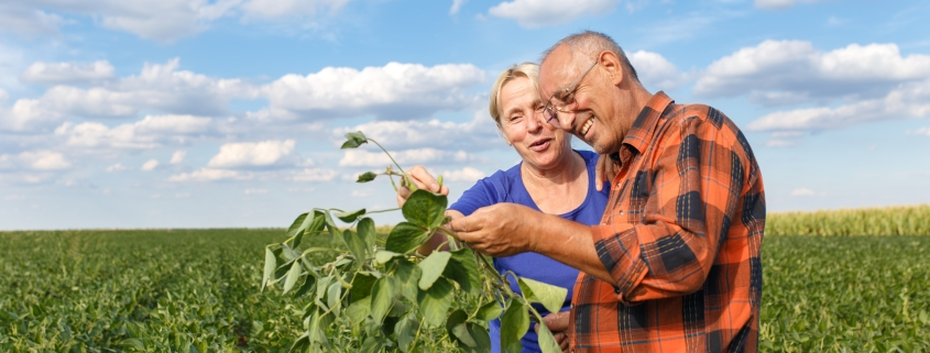 Two people in field holding soybeans